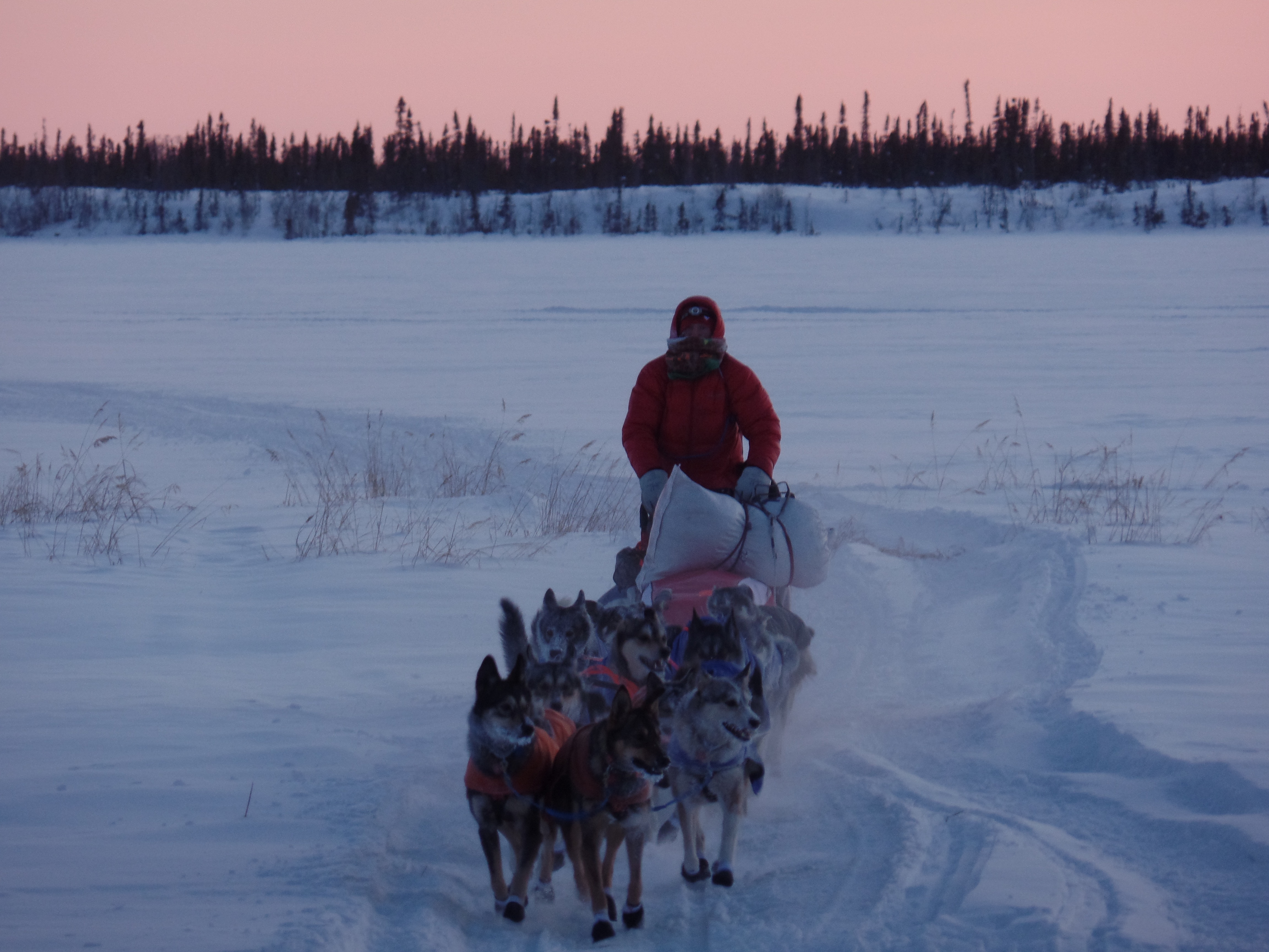 1 cabin, 50 frozen mushers, and us. An Iditarod Story.